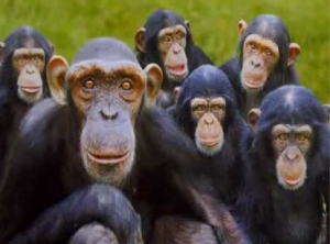 recognizing monkey faces